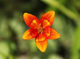 Fiery Flower Star by DatenTanzBaer