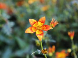 Flower on Fire by DatenTanzBaer