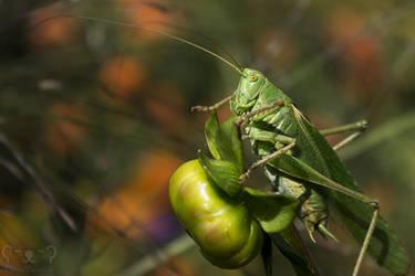 Logan the Locust by DatenTanzBaer