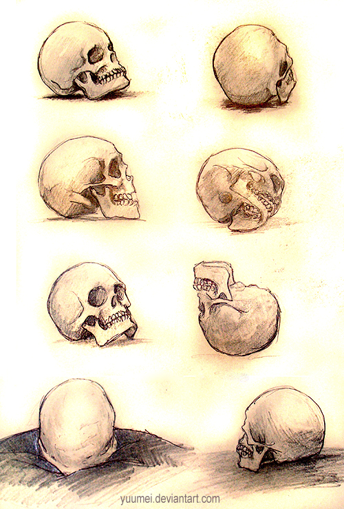 Skull Studies by yuumei