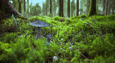 Mushroom by The-Ronyn
