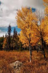 Grand Lake Autumn