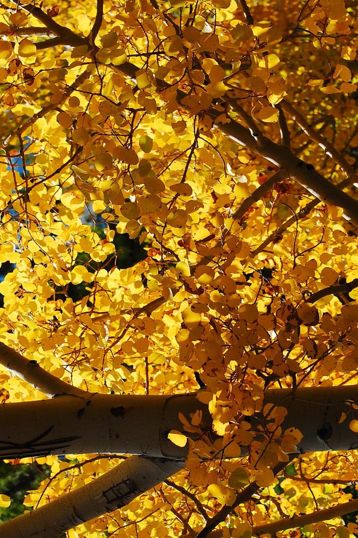Yellow Days by Corvidae65