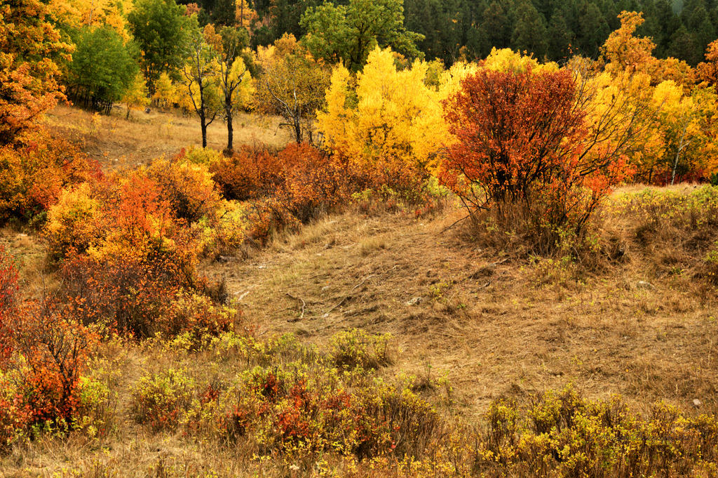 Autumnfall by Corvidae65