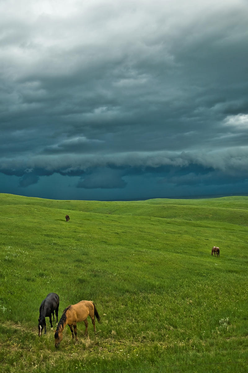 Wild Montana Skies by Corvidae65