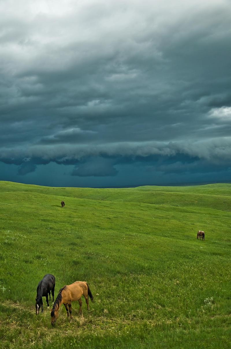 Wild Montana Skies by Corvidae65