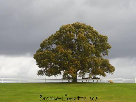 Single Tree With Horses