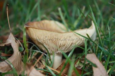 Up-Close Mushroom