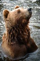 Bear by HeroinForMyHeroine