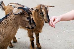 Petting Zoo by HeroinForMyHeroine