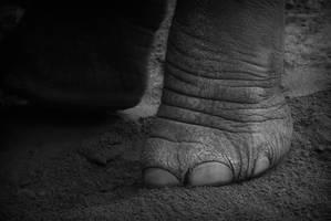 Elephant foot by HeroinForMyHeroine