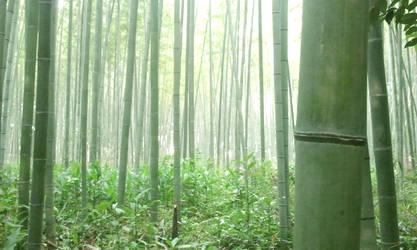 Bamboo Grove by kari-over