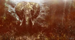 Elephant 70. by KuldarLeement