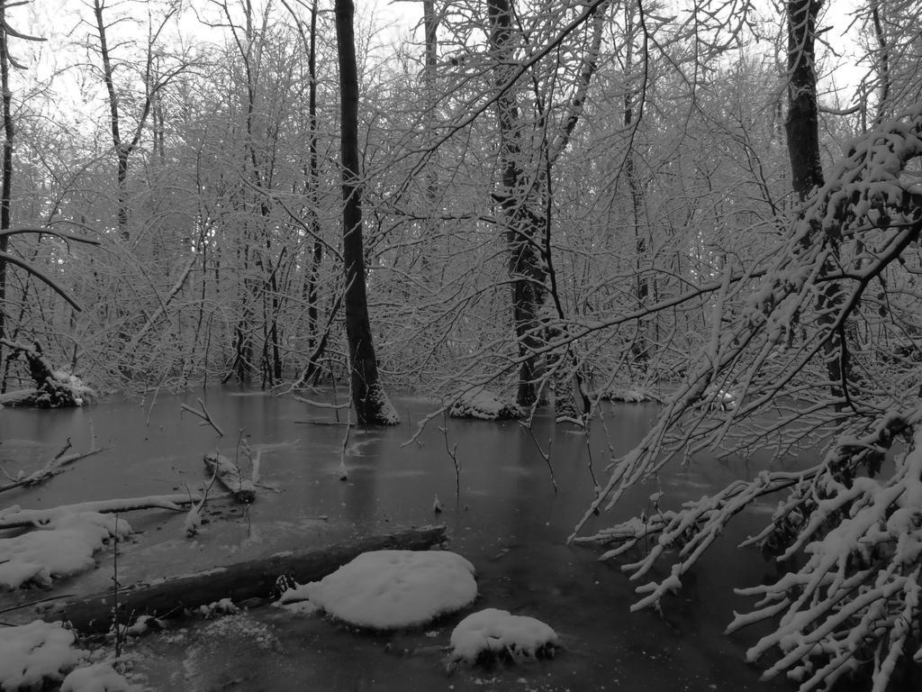 Frozen Lake by Lvarcolac