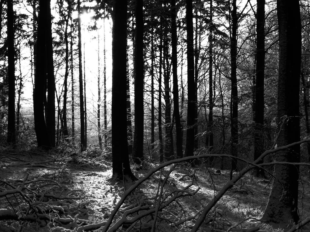 Through The Trees by Lvarcolac