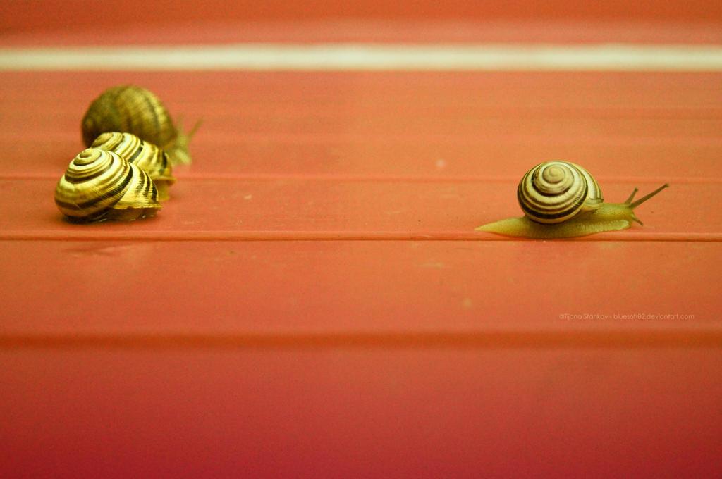 run run...snail race by bluesoft82