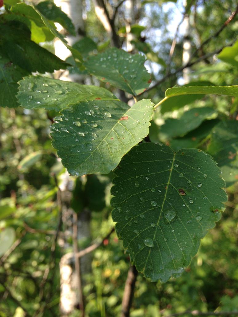 Dew Droplets by MoaVBritannia