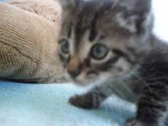 .cat. by ca-psyco