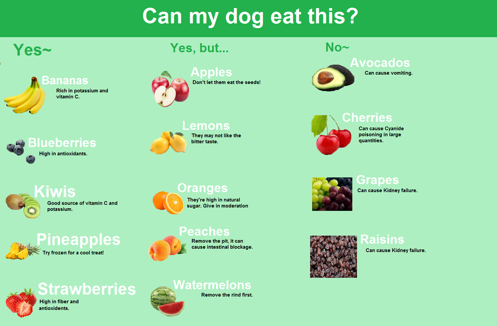 Fruits That Are Not Good For Dogs