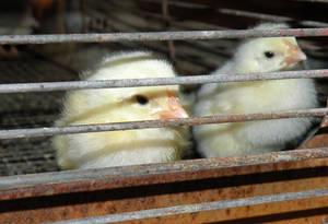 Morning Hatchlings