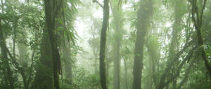 Costa Rica 13