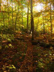 Maine Fall 5
