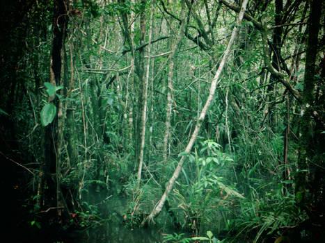 Sneak Peak Belize 2