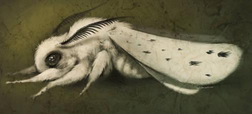 papillon de nuit by LilyOndine