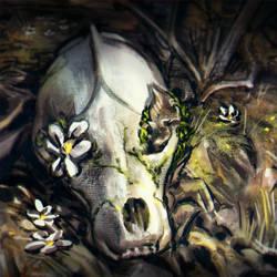 Skull Photostudy by LilyOndine