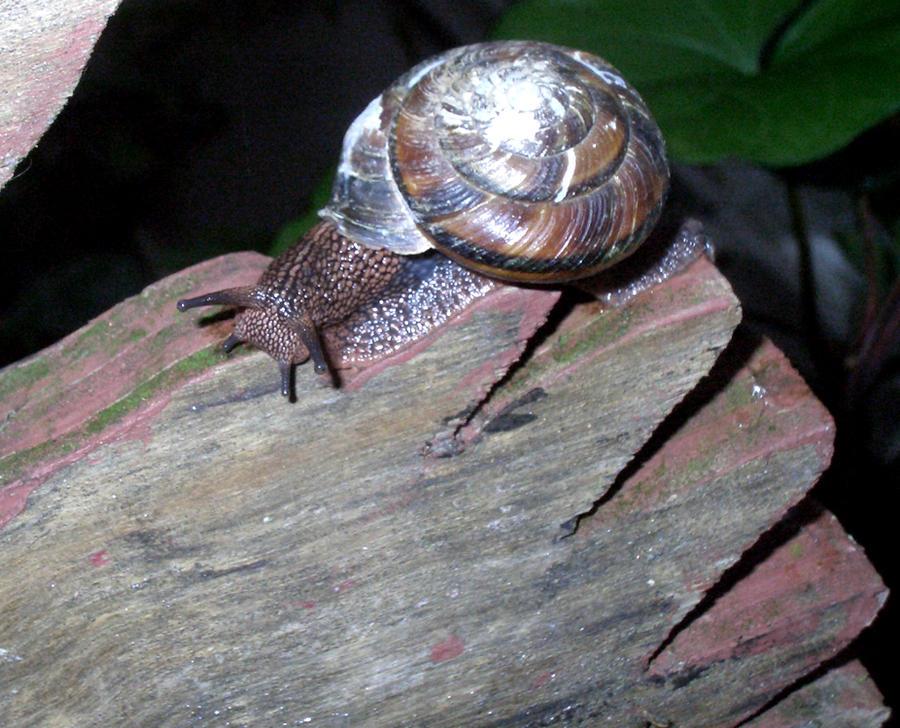 Snail by Pollybugg