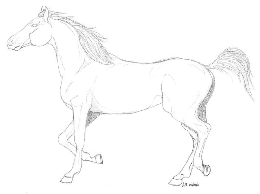 arabian horse trotting by MilA-10 on DeviantArt