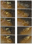 Color Storyboard