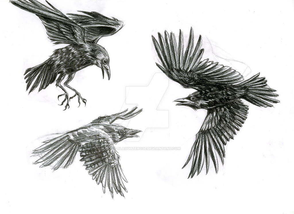 Crows tattoo study by Slaughterose