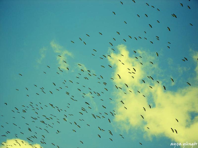 Birds II by gungorayca
