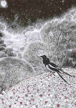 magpies in the springtime trees