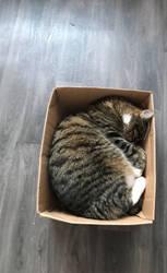 Box. by Putns