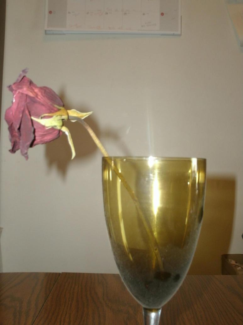 Dead rose 2 by darknesslover009