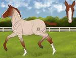 Barroco Foal Design | Lucid-Dimensions