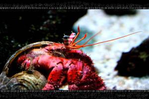 Herr Mitt-Crab by Mantis-nk