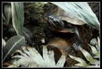 Chillkroete by Mantis-nk