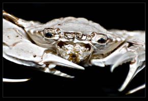Crabbly Grabbler by Mantis-nk