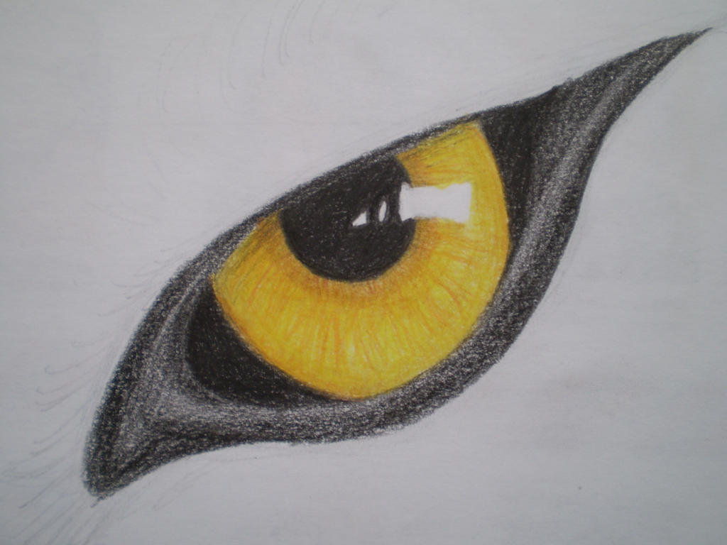 The Gallery For Gt How To Draw A Wolf Eye