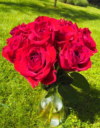 Vernal Fever : Mothers Dae Three : Store Roses