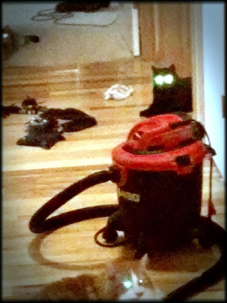 DEMON CATS! by Blockula105
