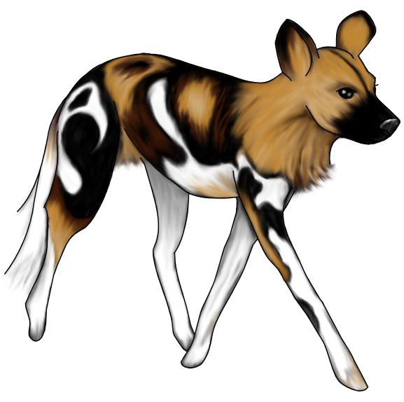 O άγριος Αφρικανικός σκύλος...