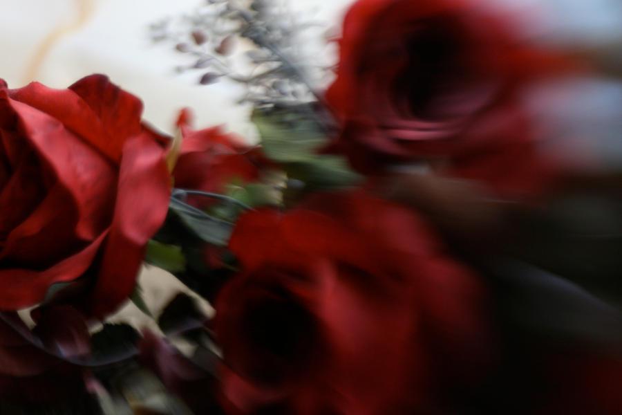 fast roses by tashanzac