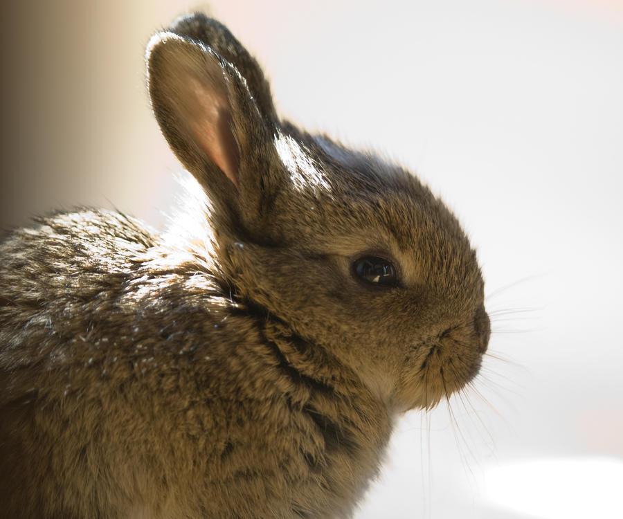 Tour Rabbit