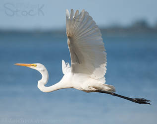 Egret by 88-Lawstock