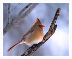 Maple Perch by jasonwilde