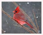 Scarlet by jasonwilde